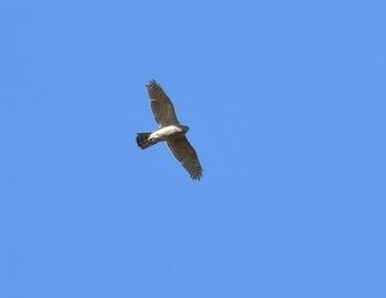 DSCN6536 (640x496).jpg
